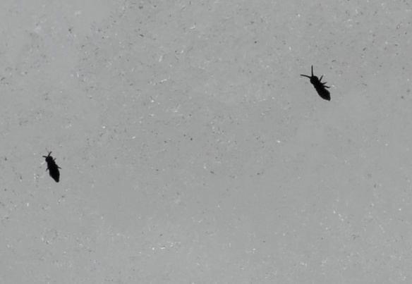 bugs in winter expeditions
